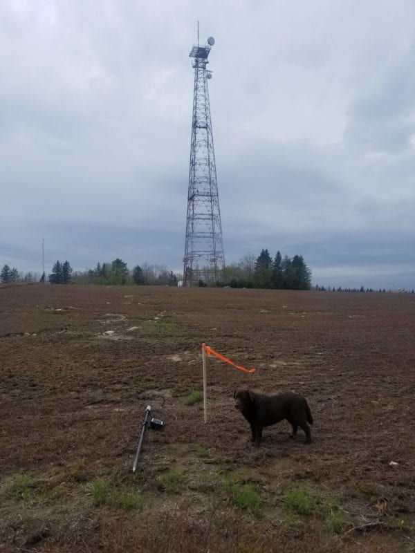 photo of penny the dog in a field in front of radio tower