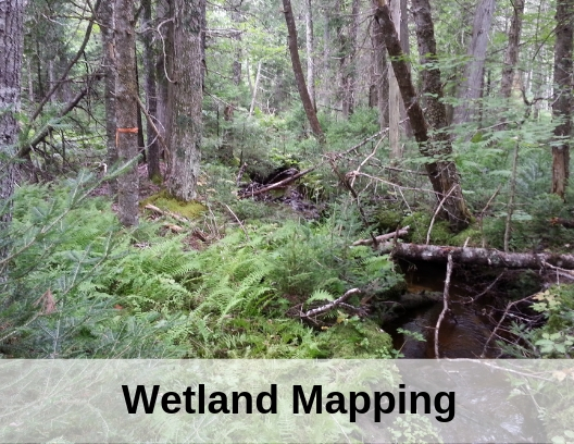photo of forest wetland with words wetland mapping